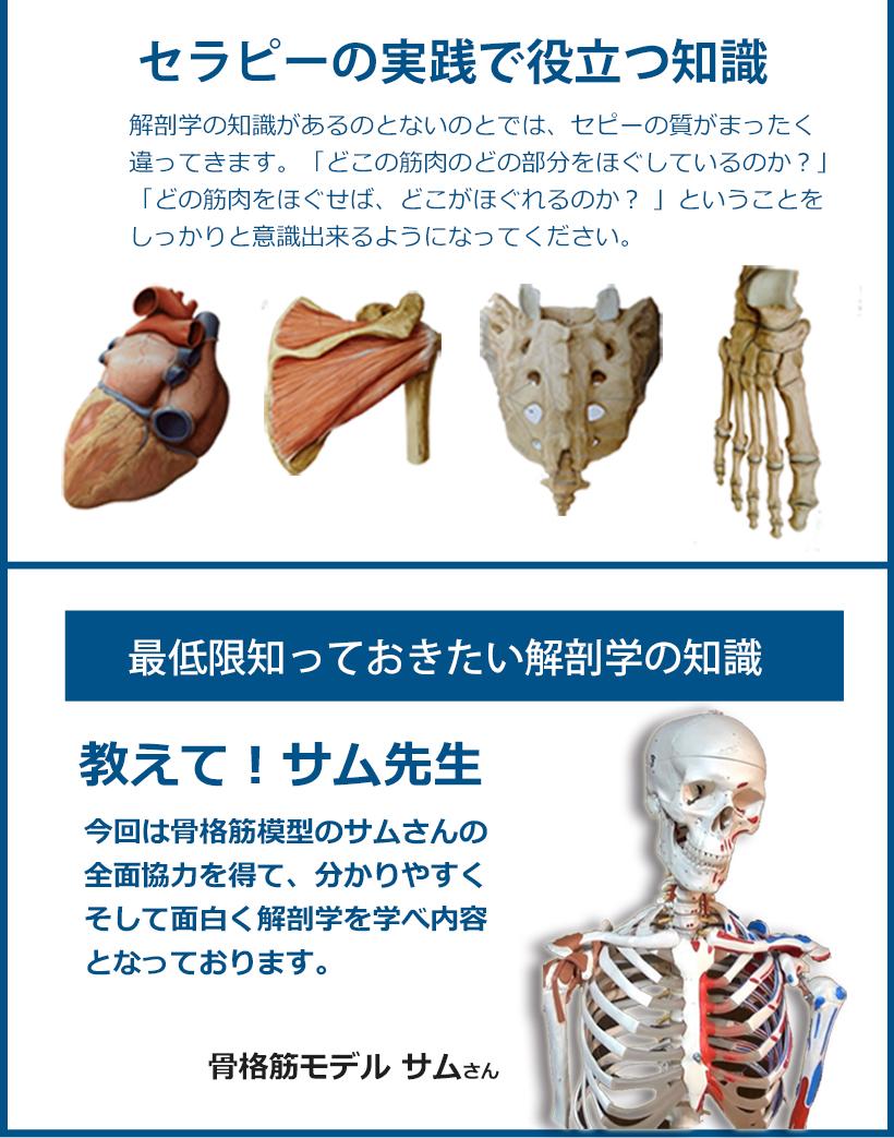 セラピーをする上で最低限知っておきたい解剖学の知識